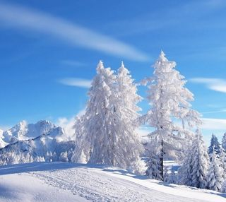 Обои на телефон холодное, снег, пейзаж, зима