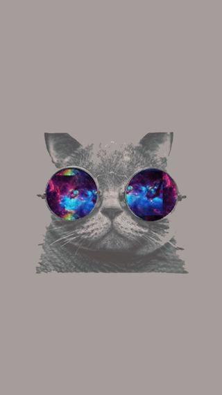 Обои на телефон хипстер, фон, солнечные очки, крутые, кошки, котята, галактика, galaxy, cool kitty, bybe