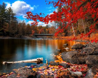 Обои на телефон тишина, природа, озеро, листья, красые, деревья, дерево, silence nature, red leaves