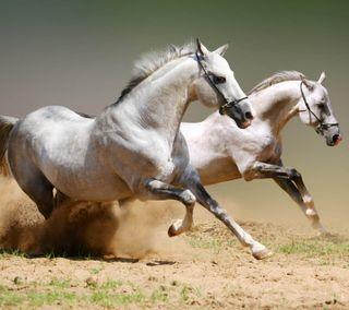 Обои на телефон лошади, horses galloping, herert, ghetrhet