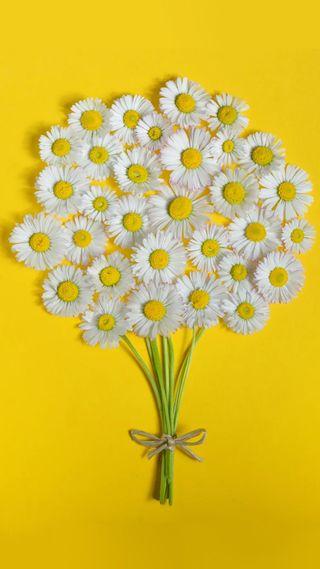 Обои на телефон маргаритка, цветы, фон, желтые, букет, белые