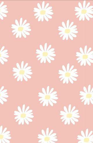Обои на телефон ромашки, маргаритка, девчачие, цветы