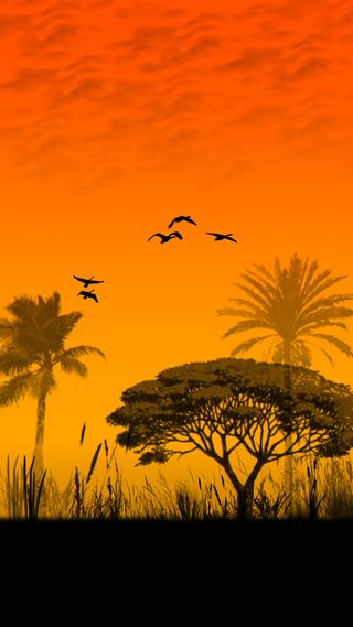 Обои на телефон вечер, птицы, небо, закат, деревья, африка, evening in africa
