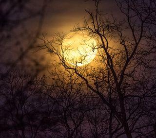 Обои на телефон силуэт, темные, луна, земля, дерево