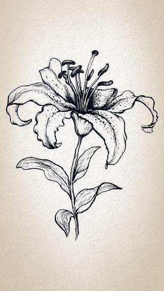 Обои на телефон панк, чернила, цветы, хипстер, татуировки, тату, крутые, дизайн, арт, flower tattoo, art