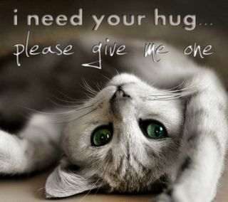 Обои на телефон твой, обнимать, котята, любовь, love, i need your hug