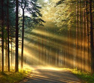 Обои на телефон путь, солнце, свет, лес, дорога, дерево, sun light