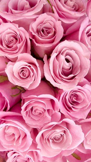 Обои на телефон розы, розовые