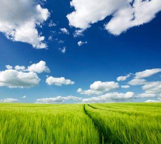 Обои на телефон цветные, сцена, синие, природа, поле, облака, небо, зеленые, land