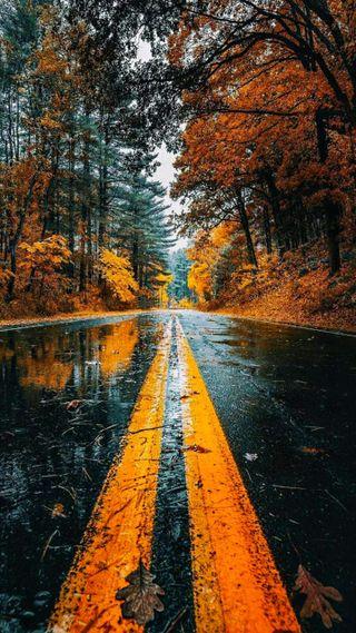 Обои на телефон природа, осень, дорога, watery road, fall nature