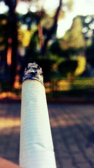 Обои на телефон сигареты, сигара, природа, зеленые, жизнь, дым