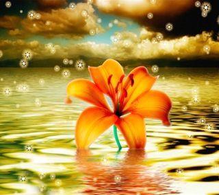 Обои на телефон тюльпаны, цветы, трава, приятные, природа, небо, деревья, дерево