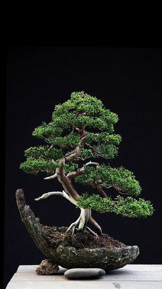 Обои на телефон удивительные, черные, рок, природа, камни, зеленые, дерево, bonsai, amazing tree