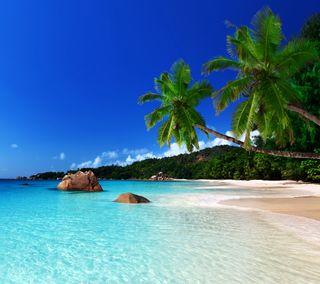 Обои на телефон пальмы, тропические, рай, пляж, море, берег