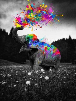 Обои на телефон фотошоп, цифровое, цветные, сюрреалистичный, слон, природа, пейзаж, облака, небо, манипуляция, коллаж, животные, деревья, брызги, артист, арт, surrealist, surreal artist, surreal art, photoshop artist, photoshop art, photomontage, photomanipulation, herbs, elephant color splash, digital manipulation, digital artist, GEN_Z__, Elephant