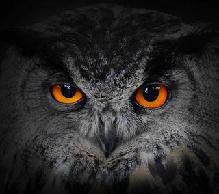 Обои на телефон птицы, фон, сова, мудрые, животные, глаза