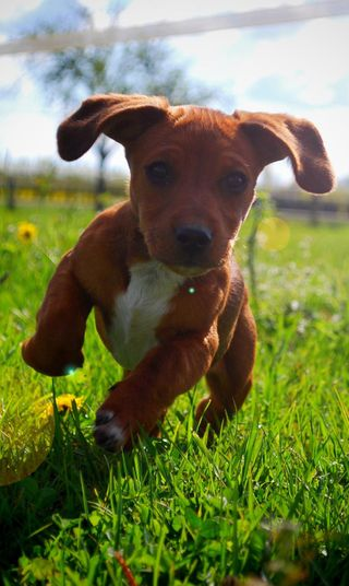 Обои на телефон щенки, коричневые, черные, цветы, трава, сад, зеленые, бег