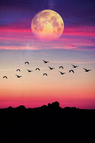 Обои на телефон птицы, фиолетовые, синие, розовые, облака, луна, летать, silhoutte, lunatic, fly to the moon, colordsky