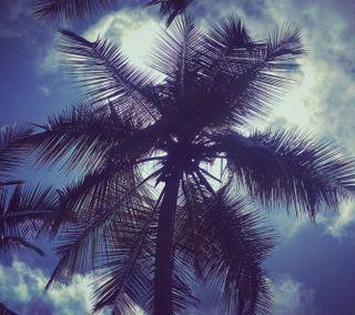 Обои на телефон шри ланка, тень, облака, небо, деревья, дерево, coconut tree, coconut, bluesky