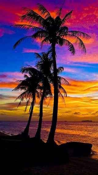 Обои на телефон остров, цветные, синие, океан, лето, красые, закат, деревья