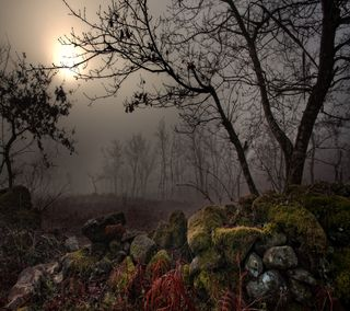 Обои на телефон рок, темные, природа, ночь, небо, камни, дерево