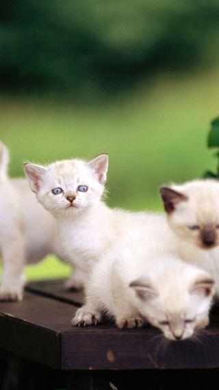 Обои на телефон милые, коты, группа, innocenct, cute cats in group, cate