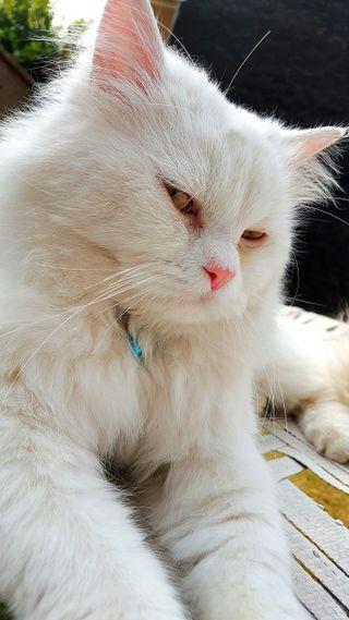 Обои на телефон микс, маленький, кошки, коты, животные, белые, whitecat, beautifulcat