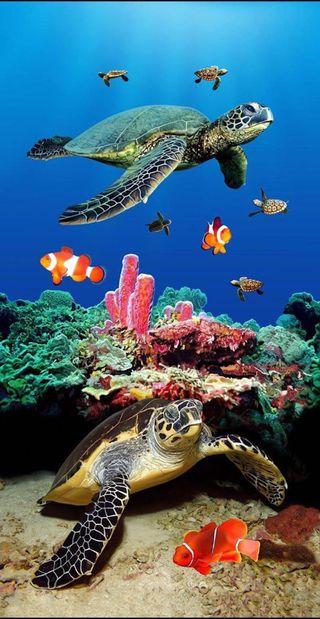 Обои на телефон черепахи, черепаха, море