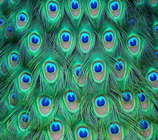 Обои на телефон павлин, шаблон, текстуры, птицы, перо