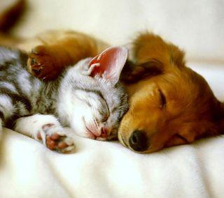 Обои на телефон друзья, собаки, смайлики, кошки, good friends