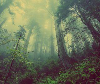 Обои на телефон туман, дерево, природа, пейзаж, на улице, лес, зеленые, zedgearday17, green mist, arbor