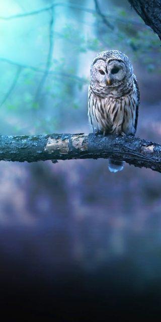 Обои на телефон сова, синие, птицы, белые