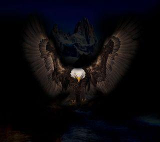 Обои на телефон орел, темные, ночь