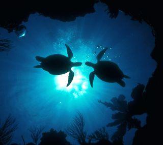 Обои на телефон черепаха, любовь, turtle luv, love