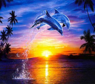 Обои на телефон подводные, закат, underwater delfine, underwater  delfine