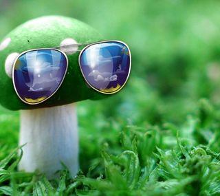 Обои на телефон солнечные очки, природа, крутые, зеленые, грибы, nature wallpapers