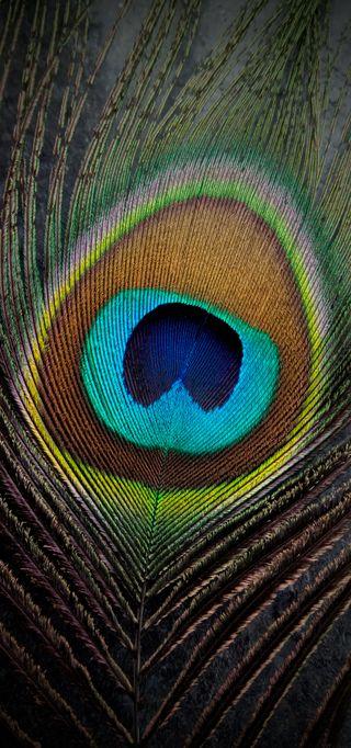 Обои на телефон павлин, реал, перья, перо, кришна, peacocks, peacockfins, peacock fins, find, bansuri