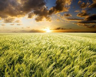 Обои на телефон удивительные, трава, природа, поле, новый, лучшие, крутые, 2012