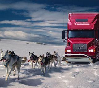 Обои на телефон грузовик, собаки, снег, забавные, snowdogs