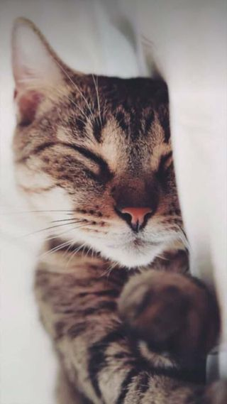 Обои на телефон goodnight, ночь, кошки, лев, утро, коты, сон, чат