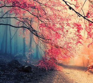 Обои на телефон осень, лес, autumn forest, 2160x1920