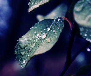 Обои на телефон капли дождя, природа, осень, листья, капли, дождь, вода, fall rain of nature