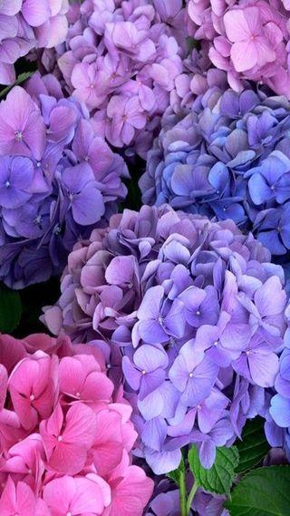 Обои на телефон весна, цветы, spring  flowers