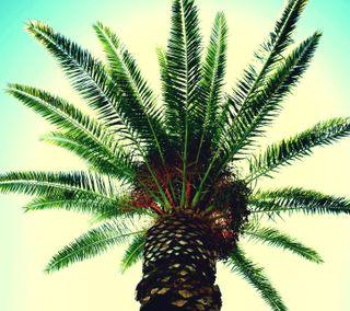 Обои на телефон тропические, природа, на улице, лес, дерево, zarborday, earthporn