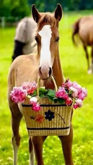 Обои на телефон лошадь, цветы, животные