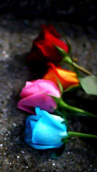 Обои на телефон тюльпаны, цветные, ты, ожидание