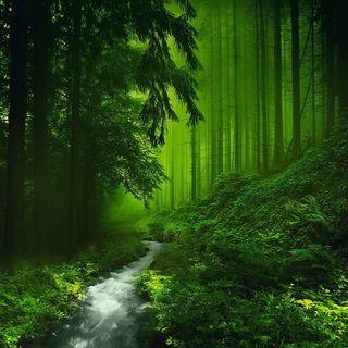 Обои на телефон мистика, лес, зеленые, деревья, trees mystic, green forest