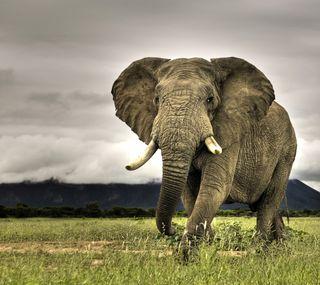 Обои на телефон слон, животные, дикие, large