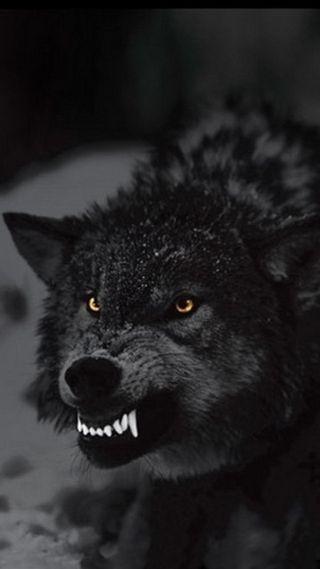 Обои на телефон темные, плохой, зубы, злые, зверь, волк, blak, bad