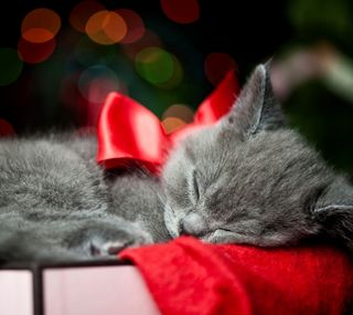 Обои на телефон котята, рождество, милые